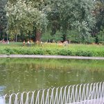 Danube Park