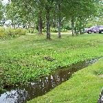 Front yard with small brook