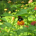 butterfly garden in front of Inn