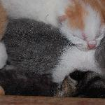3 day old kittens in the barn