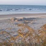 Sea Oats and the Atlantic Ocean