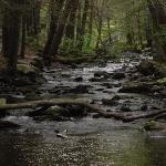 Babbling Brook Cottagesの写真