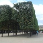 ‪Jardin du Palais Royal‬
