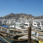 Marina Cabo San Lucas