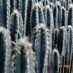 Kalimpong Cactus Nursery