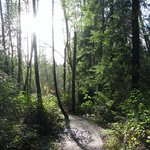 Pacific Spirit Regional Park