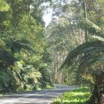 I love the Dandenongs! (actually Melbourne in general)