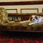  The owner&#39;s dog, who chills out in the lobby!