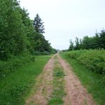 Hammies Lane on the way to Cavendish Beach