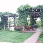 The beautiful vine walkway outside-love it!