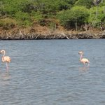 Flamingo Sanctuary