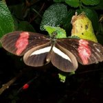 Photo of Monteverde Butterfly Garden (Jardin de Mariposas)