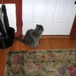Blue - the B&B Housecat