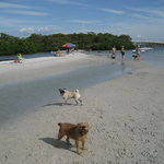 Dog Beach