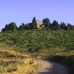 Photo of Tenuta di Monaciano