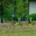 Deer in front of office