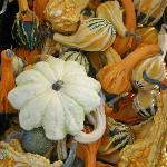  Fall gourds at the market.