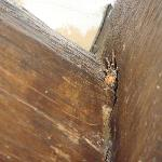 Taken of the spiders crawling through the untreated wood