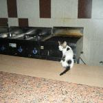 cat in the kitchen!