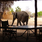 صورة فوتوغرافية لـ ‪Lake Manze Tented Camp, Selous Game Reserve‬