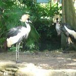 Bali Bird Park