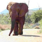 Pilanesberg Game Reserve