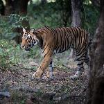 Foto de Ranthambhore Safari Lodge