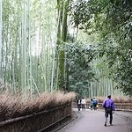 Bamboo Street