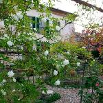 Φωτογραφία: Bed and Breakfast La Limonaia