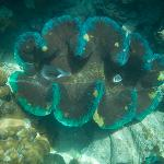 Giant clams were amazing!