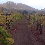 Baron Balch'e Vineyard - across the valley from the Hacienda