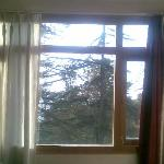 Pine tree top from hotel