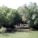 Photo of Sungei Buloh Wetland Reserve