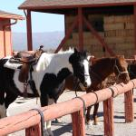 Flying E Ranch Wickenburg