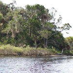 Tomoka State Park