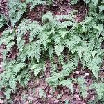 ferns growing in the shade