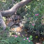 Creek on the grounds of Norma's Villas (La Garita, CR)