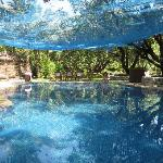  The pool by - the net stopped leaves falling in