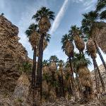 Indian Canyons (Palm Canyon Trail), California