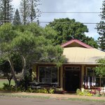 The Local Gentry, with the koa tree on the left.