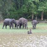 Elephant family taken from Boat
