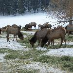  Elk Reserve