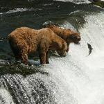 Katmai National Park