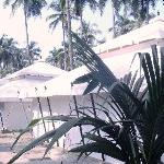 Mohul Tents