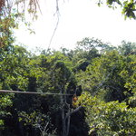 Gorilax Jungle Park