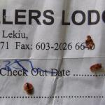 Bedbugs on the hotelbill
