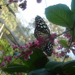 Samui Butterfly Garden