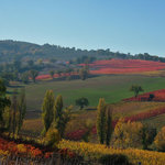 Gusto Wine Tours