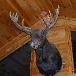 there is lots of taxidermy in Gramp's cabin