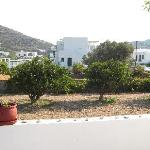 View of the back garden's fruit trees and the mountains